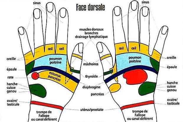 Zones réflexes des mains face dorsale