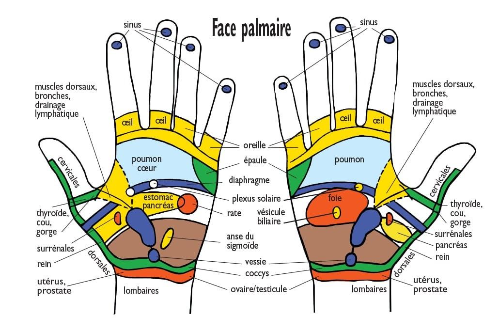 Zones réflexes des mains face palmaire